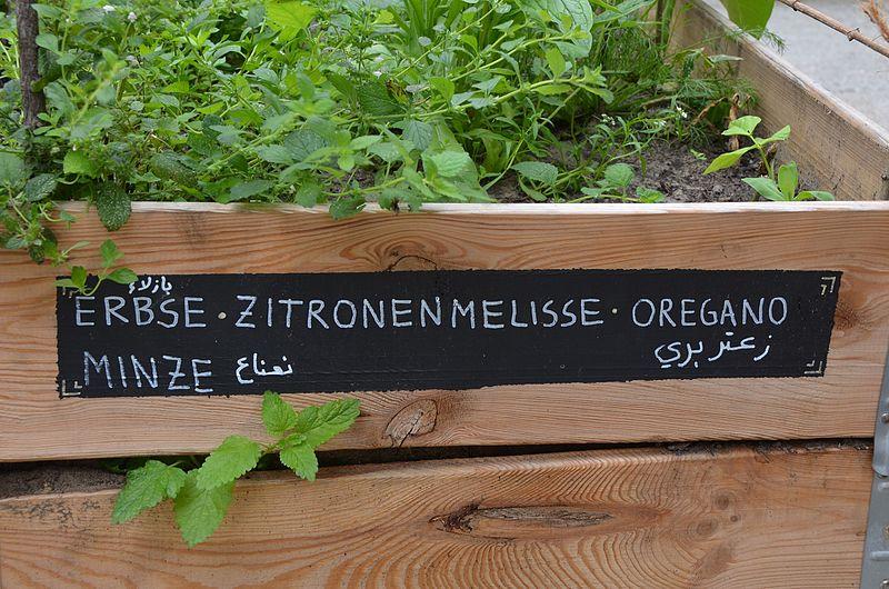 Natur_in_der_Stadt_IMG_88